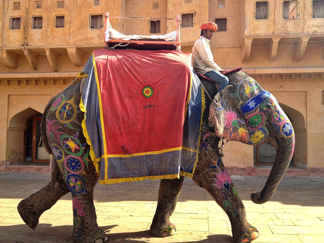 amer fort elephant and rider