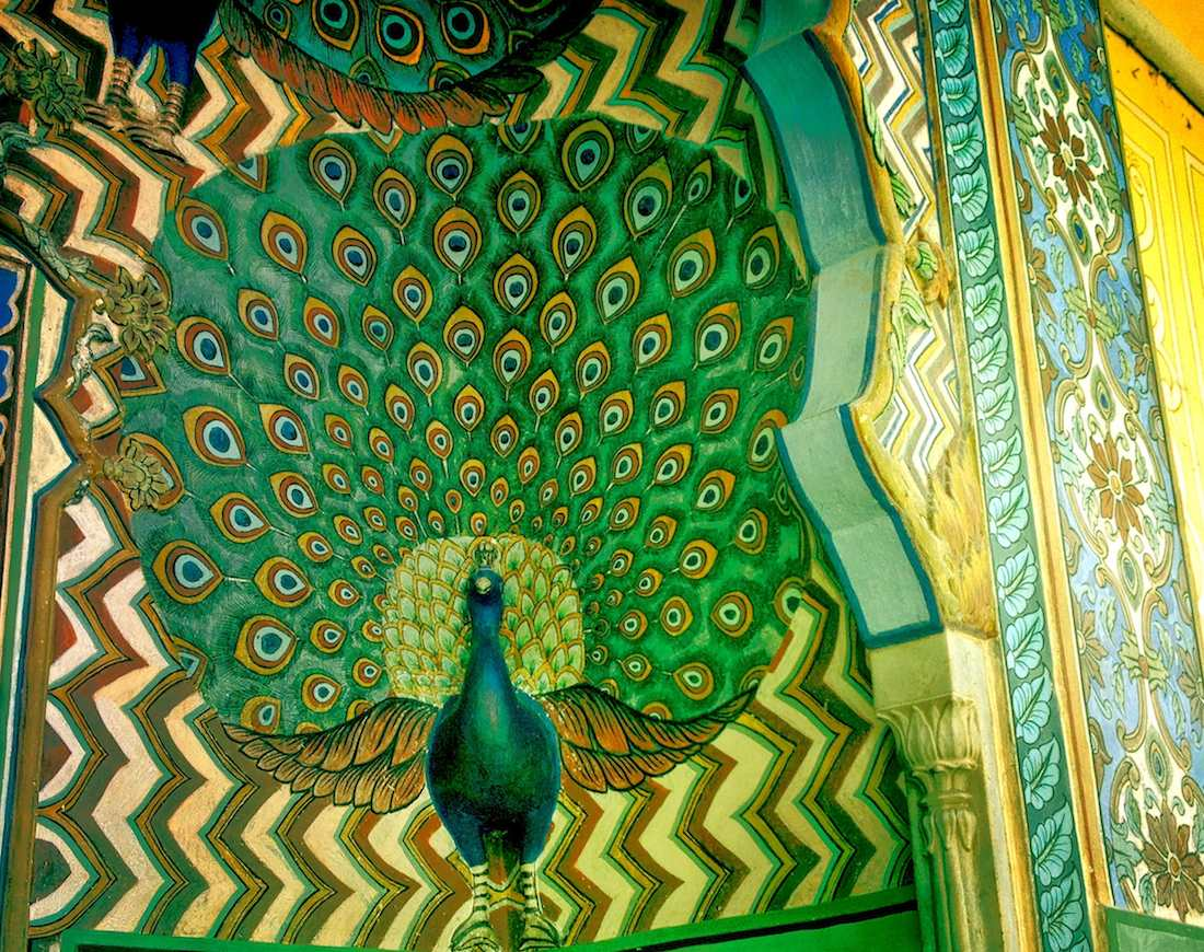 peacock at city palace jaipur