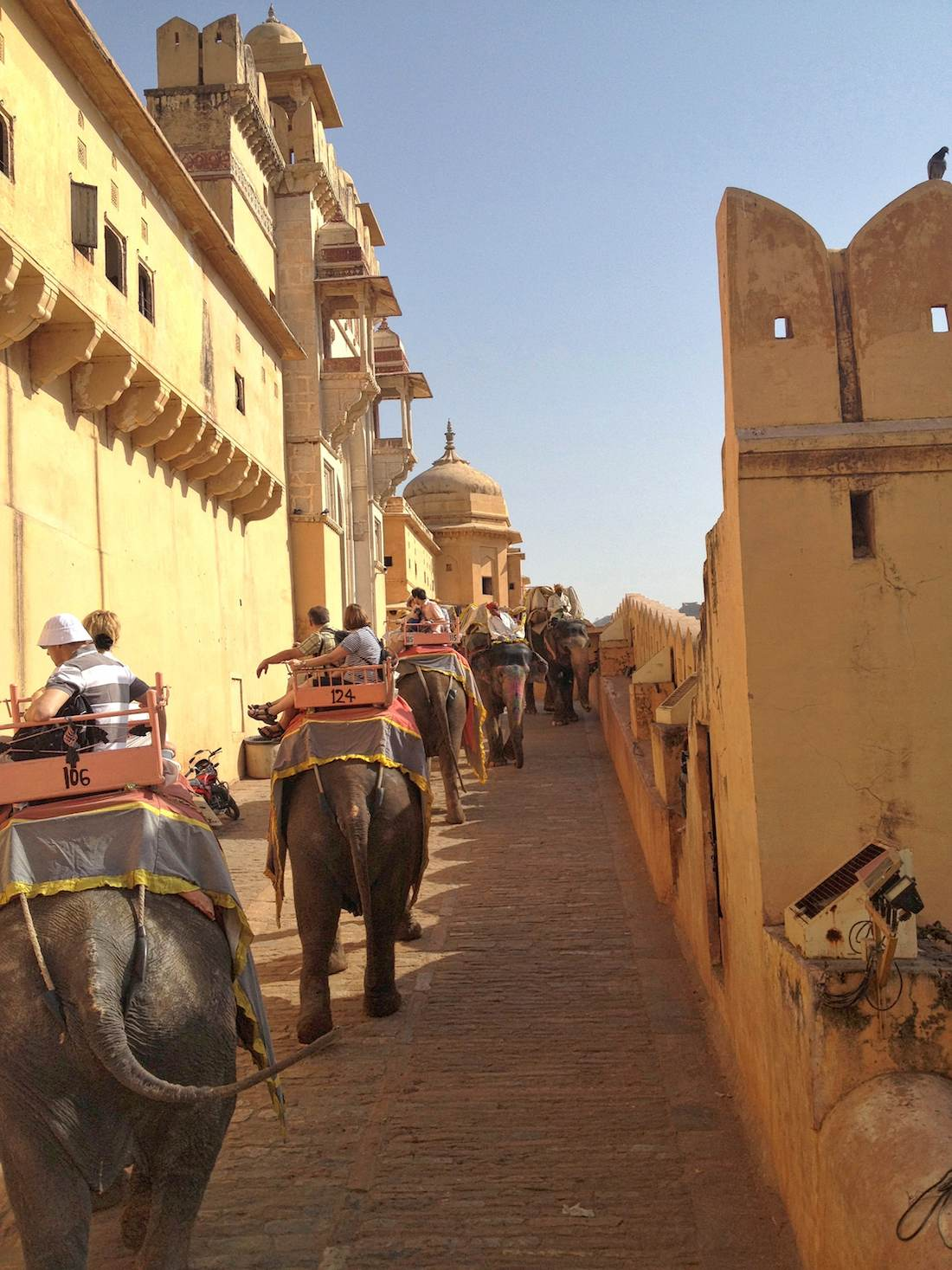 amer fort elephants