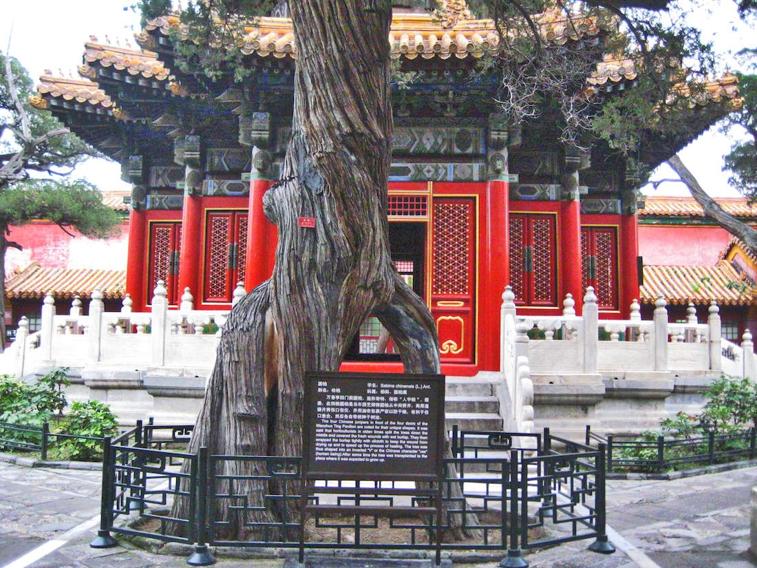 forbidden-city-imperial-garden-tree