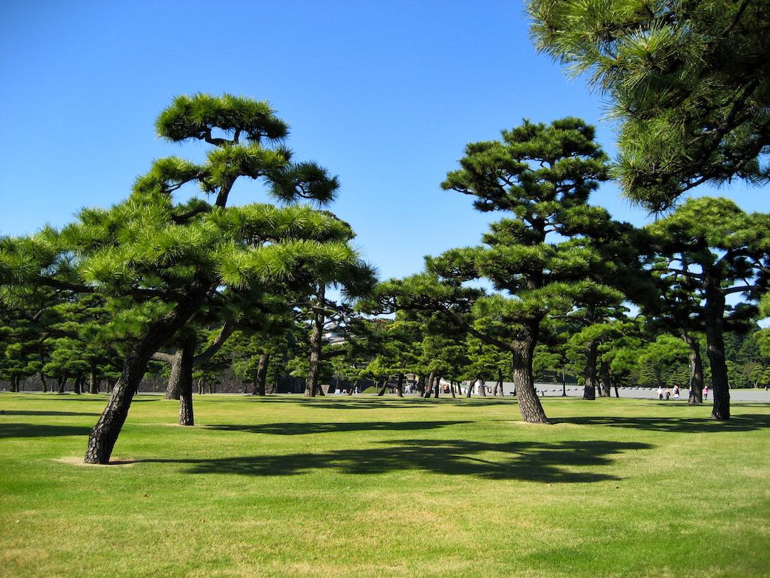 imperial-palace-tokyo-surrounding-trees